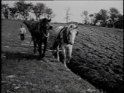 vidéos et rushes de 1925 ws boy walks behind horses plowing field / united states - 1920