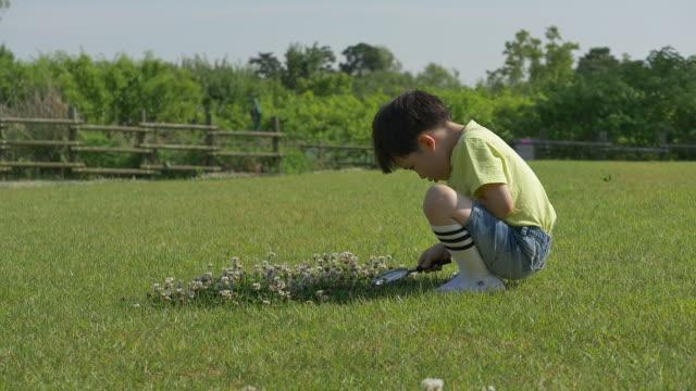 vidéos et rushes de a boy watching a plants with a magnifying glass in the park - pelouse