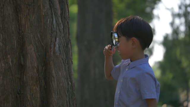 a boy watching a wooden post with a magnifying glass in the park - magnifying glass stock videos & royalty-free footage