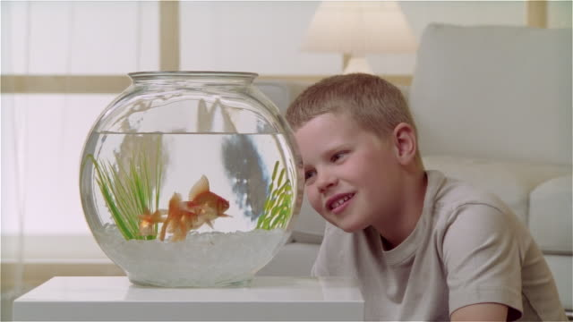 cu boy watching goldfish eat in bowl - fishbowl stock videos and b-roll footage
