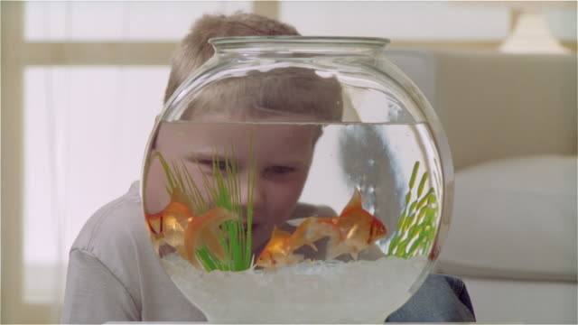 cu boy watching goldfish eat - fishbowl stock videos and b-roll footage
