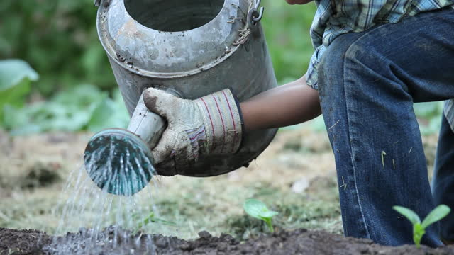 vídeos de stock e filmes b-roll de boy watering seedlings in garden with watering can - semente