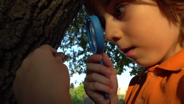 a boy who studies with a magnifying glass in forest. - mollusk stock videos & royalty-free footage