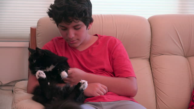 boy with a black cat - one teenage boy only stock videos and b-roll footage