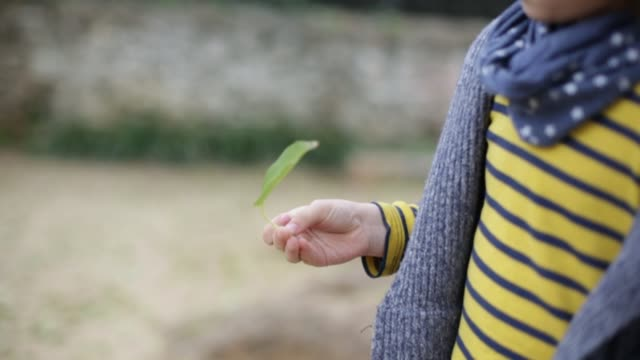 boy with autism holding leaves - invisible disability stock videos & royalty-free footage