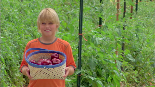 boy with basket of apples - see other clips from this shoot 1425 stock videos and b-roll footage