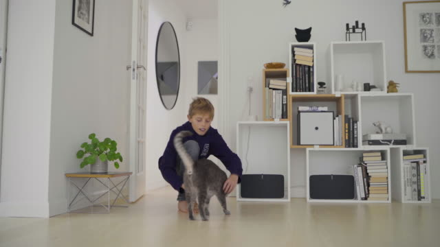 boy with cat at home - 12 13 år bildbanksvideor och videomaterial från bakom kulisserna