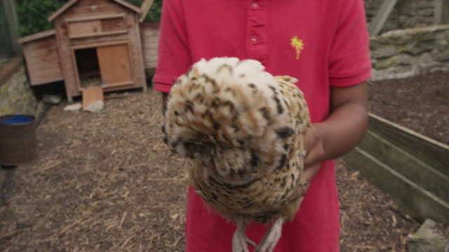 boy with chicken - chicken coop stock videos & royalty-free footage