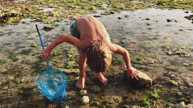 boy with fishing net exploring the beach - tide pool stock videos & royalty-free footage