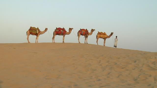 ws, boy (12-13) with four camels in sam desert, jaisalmer, rajasthan, india - 12 13 år bildbanksvideor och videomaterial från bakom kulisserna