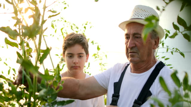 boy with grandfather gardening. - candid stock videos & royalty-free footage
