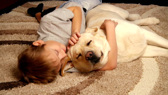 boy with his dog - retriever stock videos & royalty-free footage