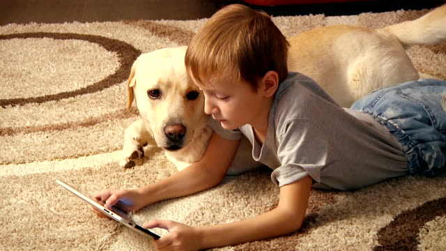 boy with his dog - canine stock videos & royalty-free footage