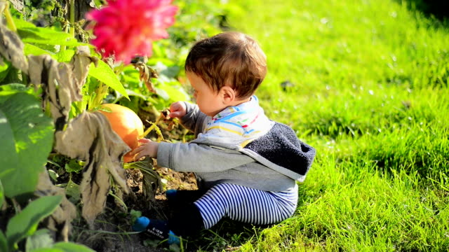 boy with pumpkin - one baby boy only stock videos & royalty-free footage