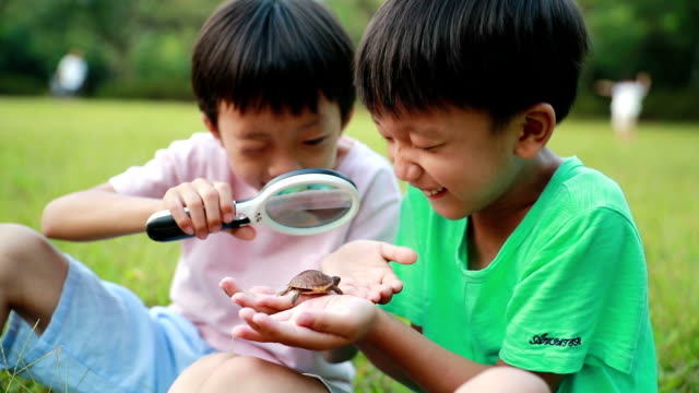 boy with turtle - magnifying glass stock videos & royalty-free footage
