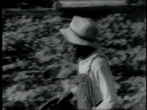 1940 montage boy working a field behind a draft animal / united states - working animal stock videos & royalty-free footage