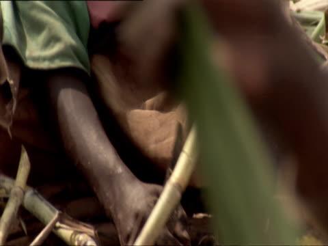 cu tu boy working in field, hand holding machete against sugar cane stalk / kigali, rwanda - フツ族点の映像素材/bロール