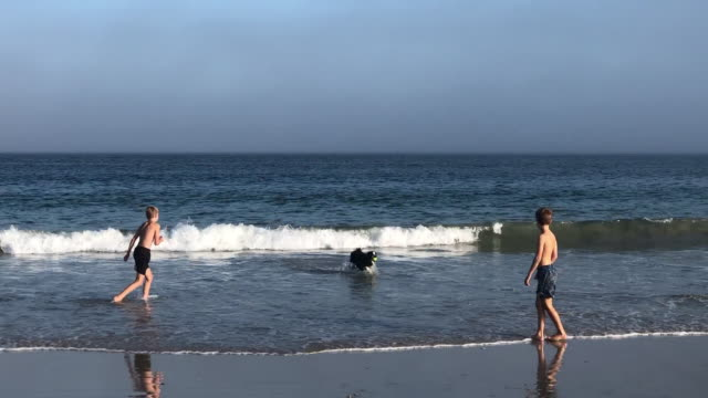 boys and their border collie dog playing in the sea with a ball - collie stock videos & royalty-free footage