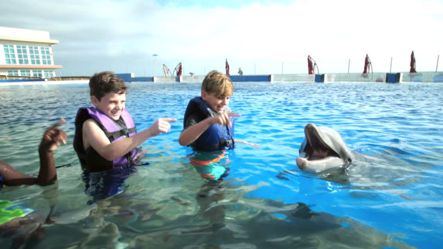 boys and trainer in water giving hand signs to dolphin - waist deep in water stock videos & royalty-free footage