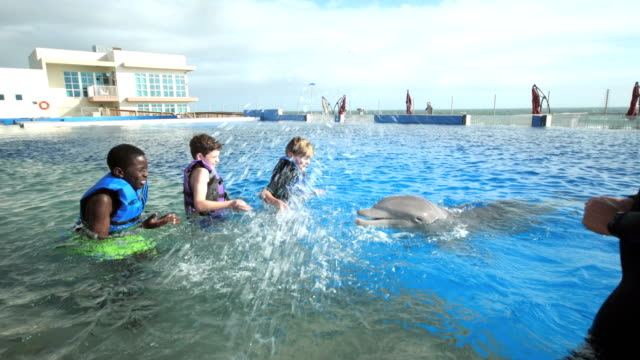 boys and trainer in water with dolphin, splashing - waist deep in water stock videos & royalty-free footage