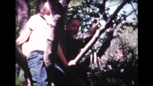 1961 boys climbing tree and on rope swing