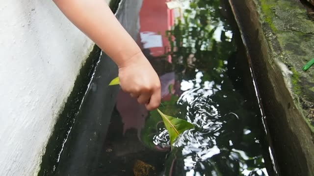 Boy's Hand Dipping the Leaves into Water
