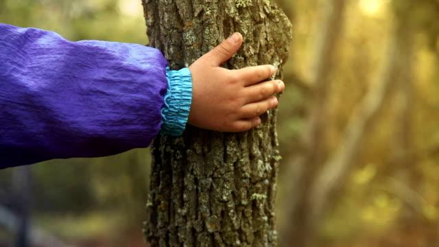 vidéos et rushes de main du garçon repose sur un tronc d'arbre - membres du corps humain