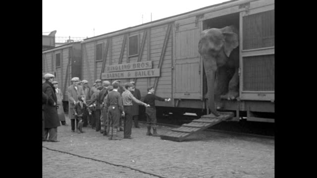 vidéos et rushes de boys in group of people standing next to train hold out food to lure elephant of ringling bros. and barnum & bailey circus standing in door of train... - wagon