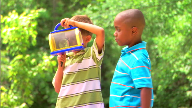 boys inspecting bug cage - この撮影のクリップをもっと見る 1278点の映像素材/bロール