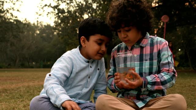 ms boys looking at fish in jar in garden / delhi, india - korslagda ben bildbanksvideor och videomaterial från bakom kulisserna