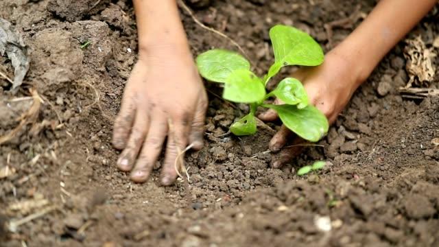 vídeos de stock e filmes b-roll de boys planting a new tree, slow motion - espalhar