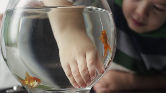 boys playing with goldfish in bowl - fishbowl stock videos and b-roll footage