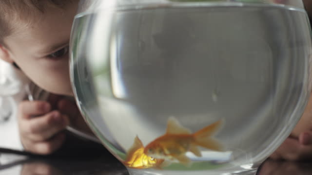 boys playing with goldfish in bowl - bowl stock videos and b-roll footage