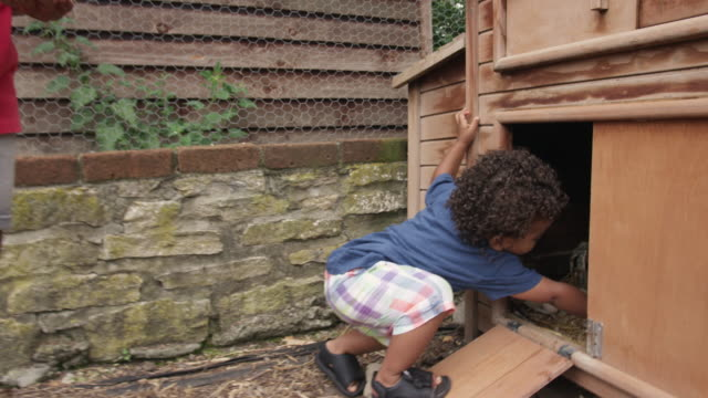 boys removing eggs from coop - chicken coop stock videos & royalty-free footage