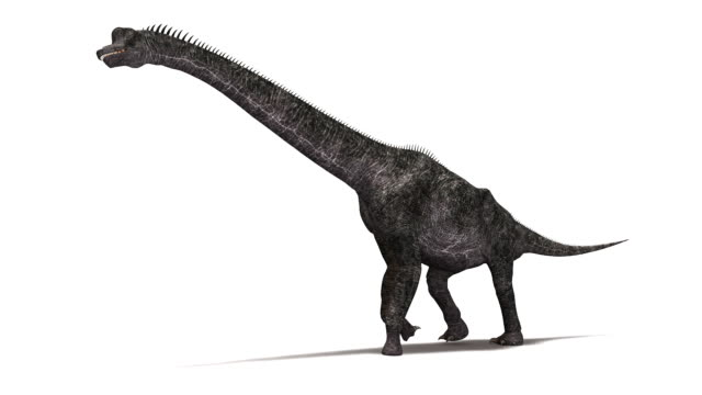 Brachiosaurus dinosaur animation. This long-necked sauropod dinosaur lived between 150 and 125 million years ago, in the late Jurassic and early Cretaceous periods.