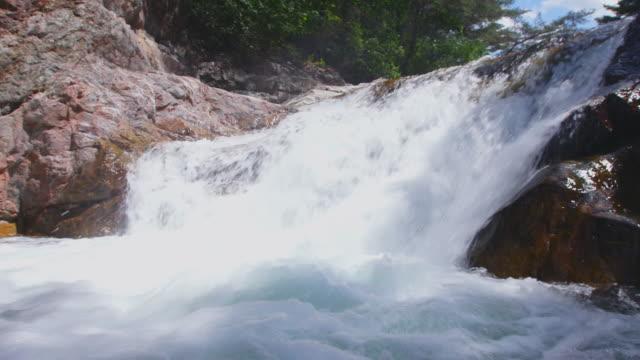 brachymystax lenok at chikso falls / nae-myeon, hongcheon-gun, gangwon-do, south korea - 野生生物保護点の映像素材/bロール