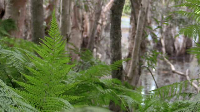 bracken ferns and trees at reservoire backwater - backwater stock videos & royalty-free footage