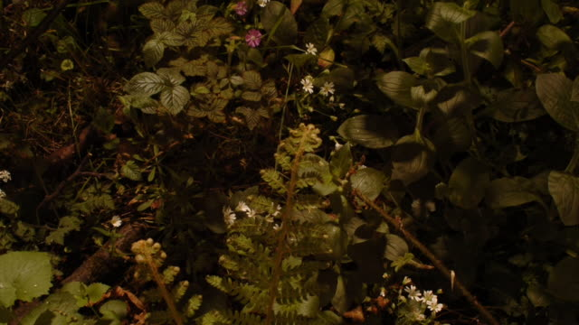 bracken ferns, stitchworts and white campion plants flutter and reach for the sun as they grow in a shaded woodland. available in hd. - fern stock videos & royalty-free footage
