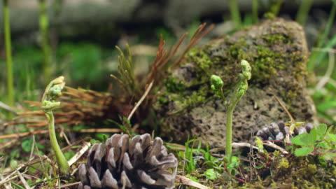 bracken plant growing from the ground in jeju island - moos stock-videos und b-roll-filmmaterial