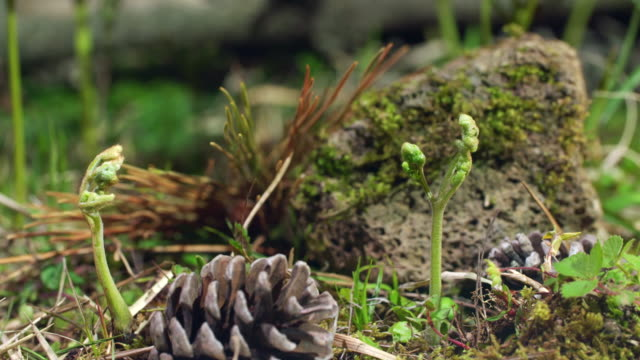 bracken plant growing from the ground in jeju island - moss stock videos & royalty-free footage