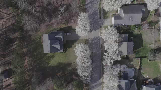 bradford päron linje grannskap gator på våren - årstid bildbanksvideor och videomaterial från bakom kulisserna