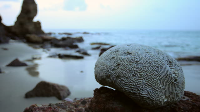 brain coral - saint lucia stock-videos und b-roll-filmmaterial