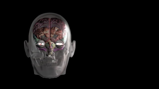 vídeos y material grabado en eventos de stock de brain in a glass-effect skull. different areas of the brain are colour-coded. - tronco cerebral