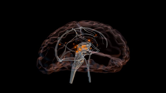 3d brain loop - nerve cell stock videos and b-roll footage