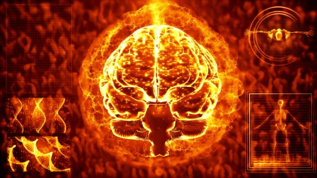 vídeos de stock, filmes e b-roll de varredura do cérebro mri - telencéfalo