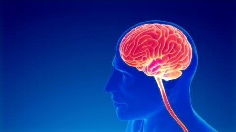 brain neuron activity - brain stem stock videos & royalty-free footage