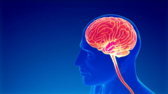 vídeos de stock e filmes b-roll de brain neuron activity - tronco cerebral