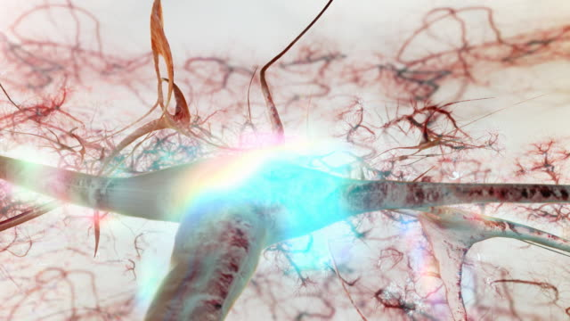 brain neurons tracking vivd - biomedical illustration video stock e b–roll