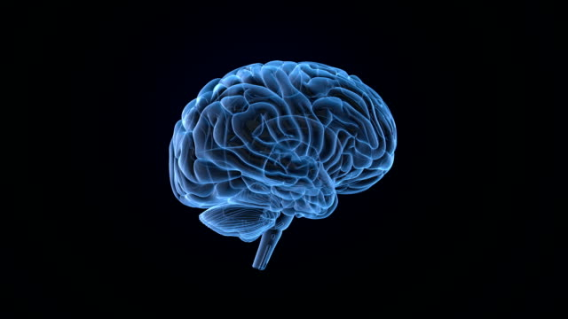 brain scan loopable - human nervous system stock videos & royalty-free footage