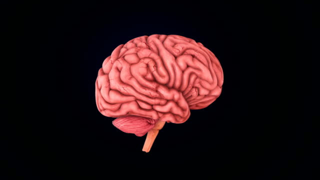brain scan - human brain stock videos & royalty-free footage
